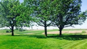 Birt Farm (Medium)