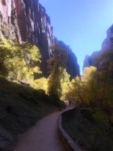 Trail in Zion (Medium)