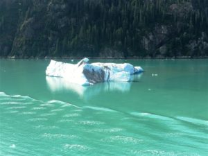 Large Ice Calf at Tracy Arm Fjord (Medium)